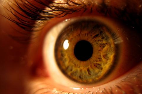 Percepción Visual y Cognición: La Percepción