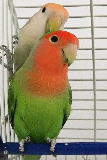 planos-de-encuadre-plano-de-dos-pareja-de-aves