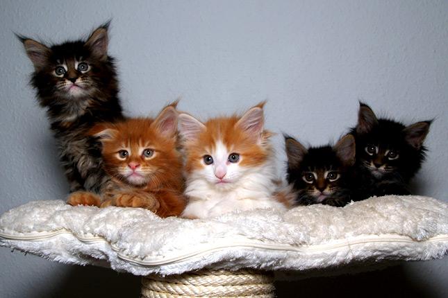 planos-de-encuadre-plano-de-grupo-lolcatz-lindo-gatito